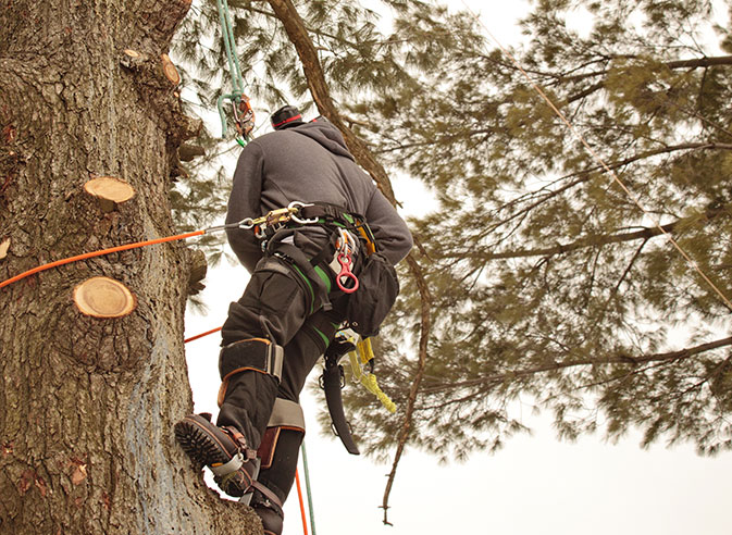 Hancock Tree Service, Inc. employee trimming a tree