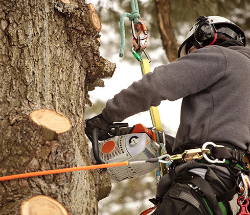 Hancock Tree Service, Inc. employee cutting a tree down