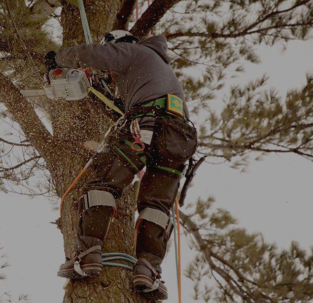 Hancock Tree Service, Inc.: Tree health in Winter Garden, Clermont and Ocoee