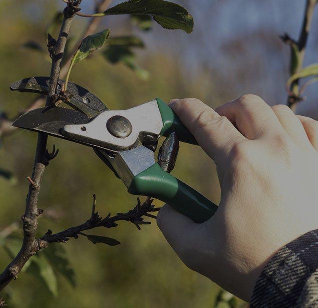 Hancock Tree Service, Inc.: Tree pruning in Winter Garden, Clermont and Ocoee