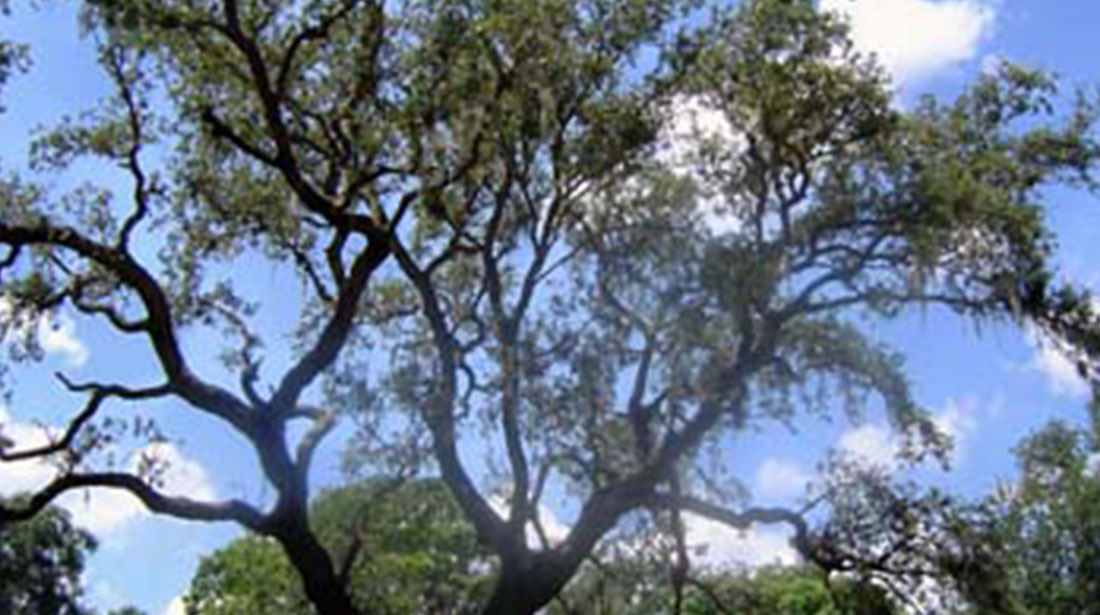 Hancock Tree Service, Inc.: Emergency tree removal in Winter Garden, Clermont and Ocoee